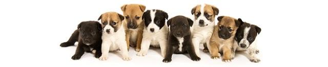 puppy-banner