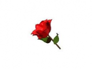 Rose-Small2
